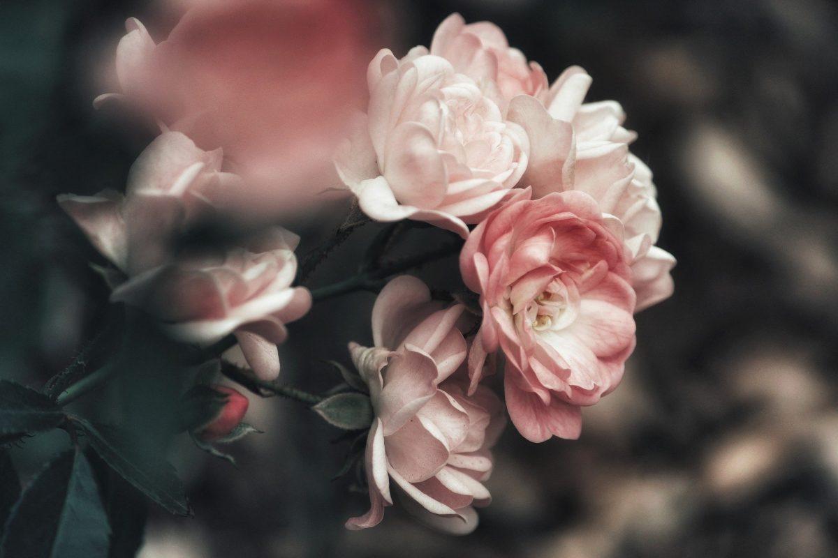 flower make up