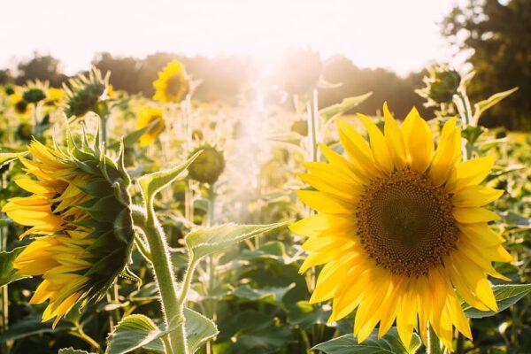 Feiten en fabels over de schadelijkheid van in de zon liggen